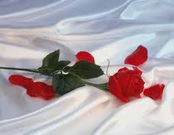 Imagem de amor 6